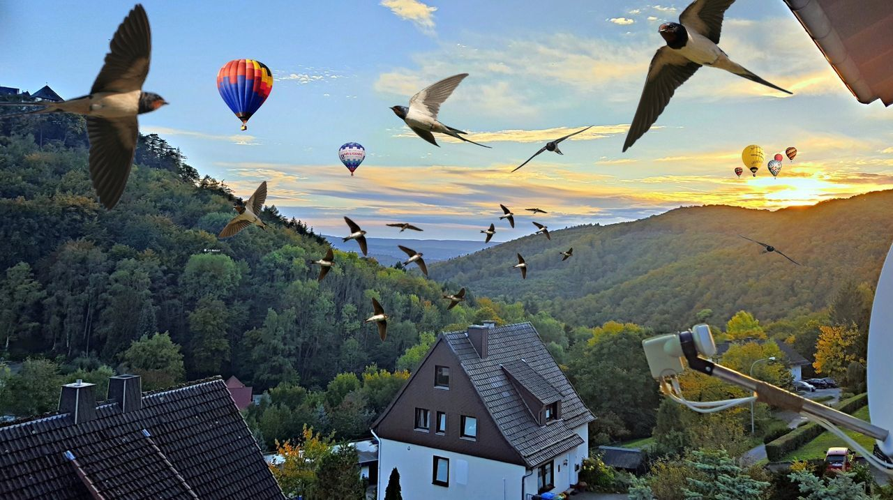 A sunset with two groups of travelers. Swallows gathering for the common flight to the south and hot air balloons enjoying a fantastic sunset over the Edersee :) Collage Art Architecture Ballooning Festival Besuty Of Nature Birds Building Exterior Built Structure Edersee Germany Flying Flying To South Hot Air Balloon Landscape Nature No People Outdoors Sky Swallows EyeEmNewHere Connected By Travel Lost In The Landscape Second Acts