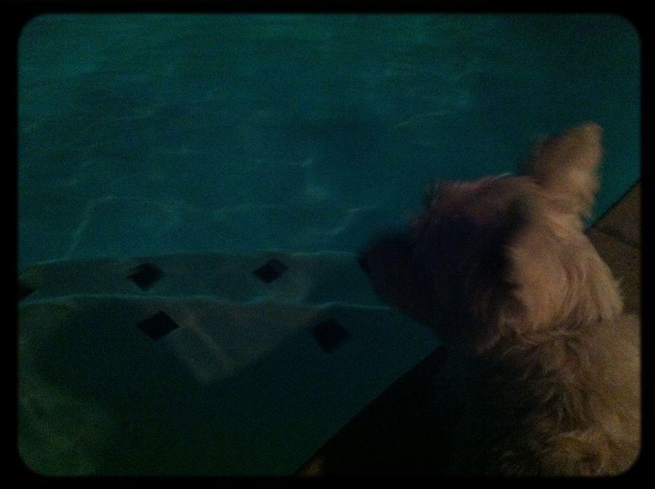 Swimming Dog Nightphotography Summer