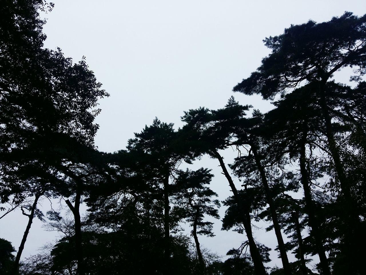 Sky Top Of The Tree Nature Omiya おみやこえん