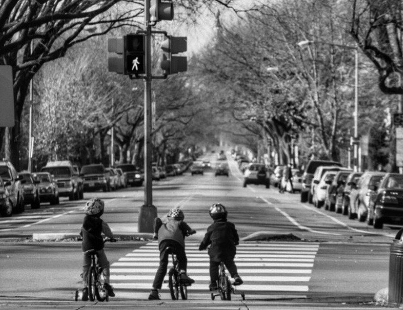 EyeEm Best Shots - Black + White Streetphoto_bw Tree Blackandwhite Streetphotography From My Point Of View