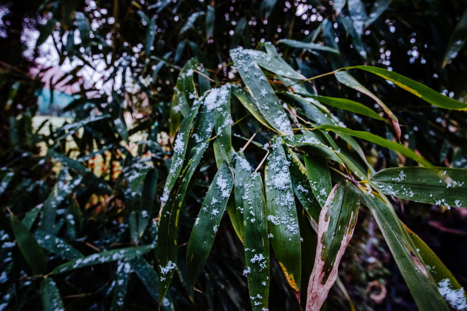 Animal Themes Beauty In Nature Close-up Cold Temperature Day Drop Fragility Freshness Green Color Growth Leaf Nature No People Outdoors Plant Water Wet