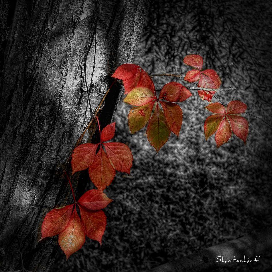 Somosfelices...y hoy, más. Happy Birthday To Me ♥  Autumn Colors I♡december