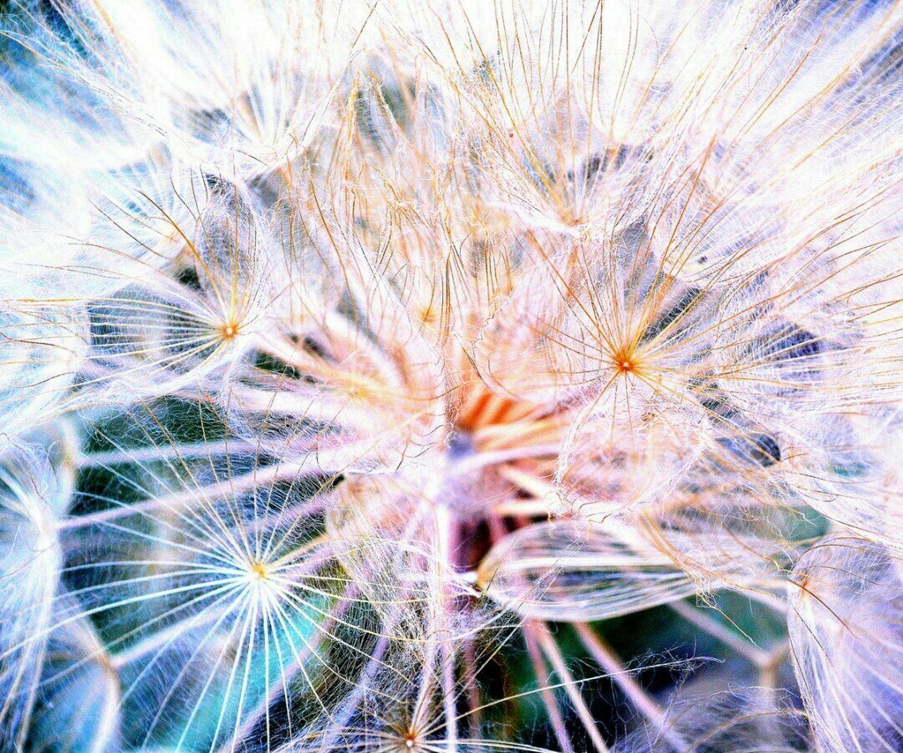 Microcosm Pjpink Microcosm Abstract Eye For Photography EyeEm