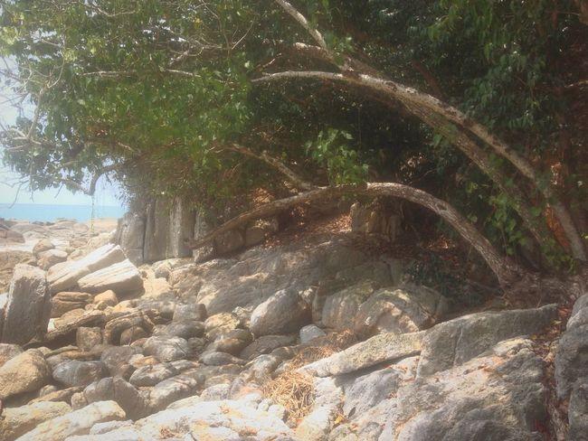 Rocks Trees Beach Relax Summer Travel Pangkor Pangkor Island Malaysia South East Asia