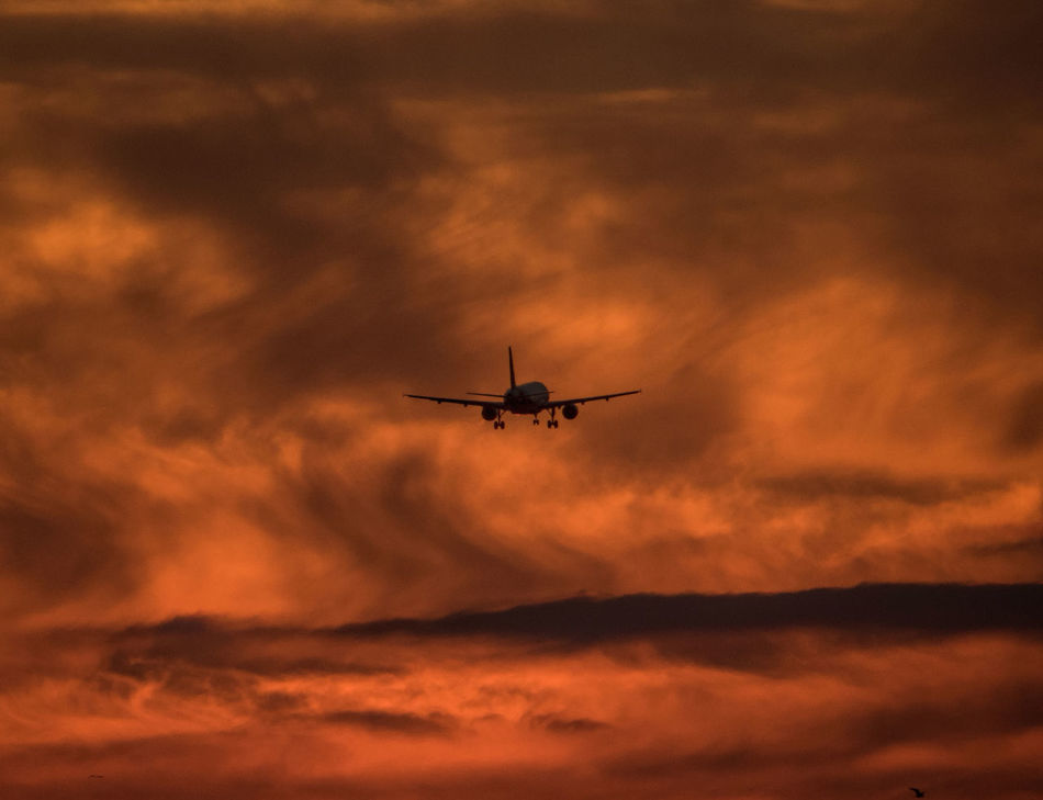 Beautiful stock photos of plane, sunset, airplane, sky, flying