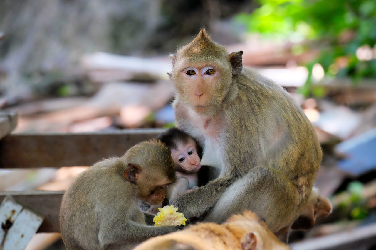 Beautiful stock photos of tierbabys,  Animal Family,  Baby,  Beauty In Nature,  Captive Animals