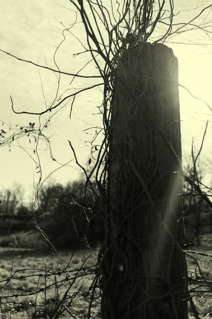 bare tree, tree, branch, day, outdoors, tree trunk, no people, sky, nature, beauty in nature, close-up, dead tree
