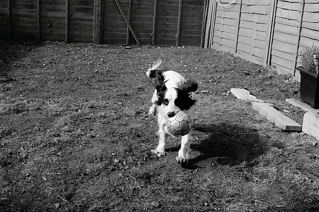 Monochrome Monochrome Photography Animal Themes Dog Pets One Animal Action Shot  ISO High Pampered Pets The Week Of Eyeem Eyeemphoto Eyem Gallery Blackandwhite Photography Eyeem Market Beauty In Nature EyeEm Nature Lover Monochrome _ Collection Eyeemphotography EyeEm Team The Eyeem Collection At Getty Images The Week On Eyem EyeEm Gallery Showcase October 2016 Experimental Photography