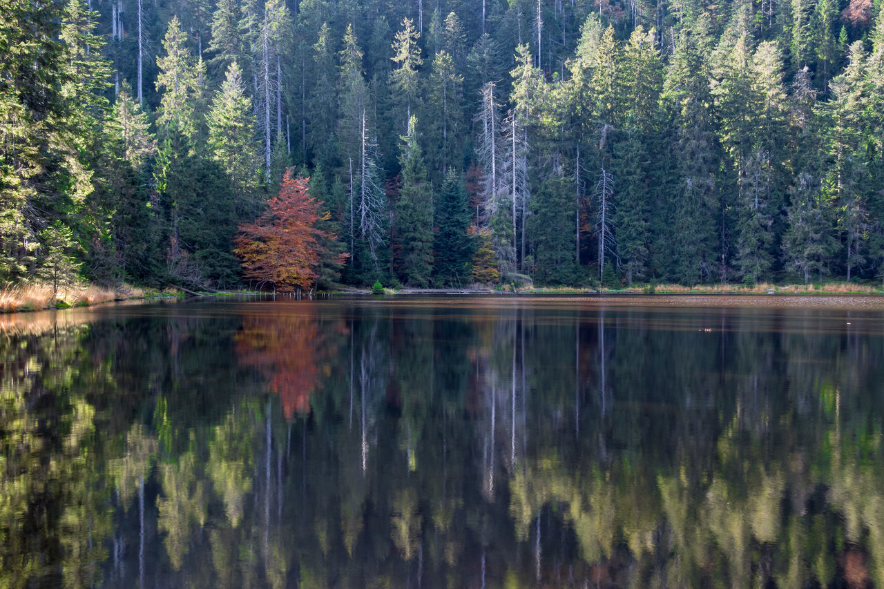 Autumn Autumn Colors Beauty In Nature Blackforest Hiking Lake Lake View Landscape Landscape_Collection Nature Nature On Your Doorstep Nature Photography Scenics Schwarzwald Tranquility Wildsee Mirror Lake Betterlandscapes