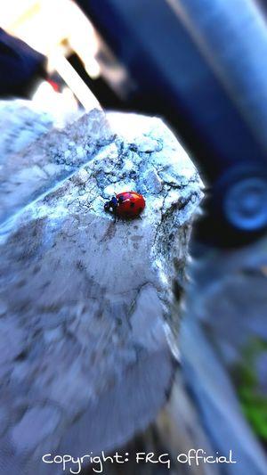 Dettaglio di un muretto in marmo con coccinella Taking Photos Nature Ladybug Street Wall Sunnyday First Eyeem Photo Check This Out Hi! City Life City_nature First Eyeem Photo