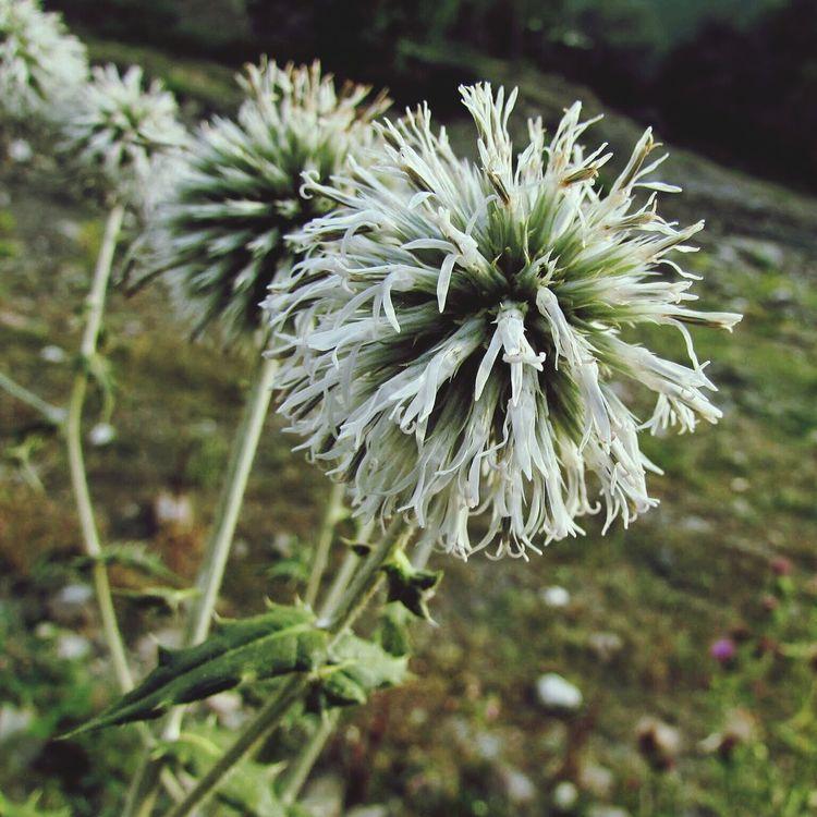 Flowres Nature Flower Walking Around