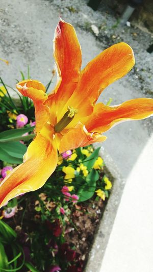 Fleur Close-up Beauty In Nature Petal Saint Cado Morbihan (56) Bretagne France