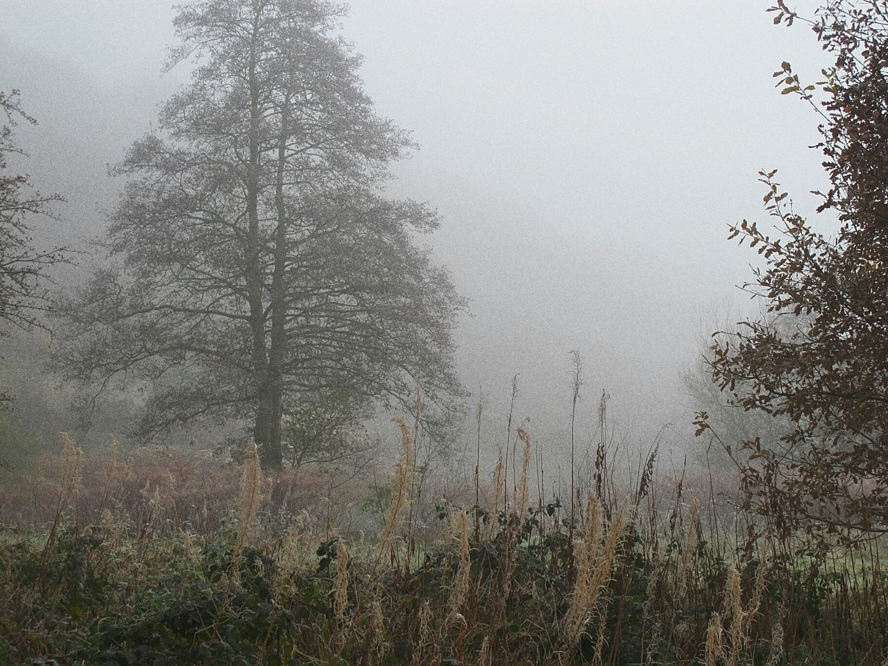 Tree Nature Fog Landscape Outdoors Plant No People Sky Beauty In Nature Day Grass Lush - Description Foggy Morning Valleys EyeEmbestshots Cold Temperature Fineartphotography Autumnbeauty Autumn Leaves Enchanted Forest WoodLand Tranquility Frosty Days Winter Is Coming Scenics Hazy
