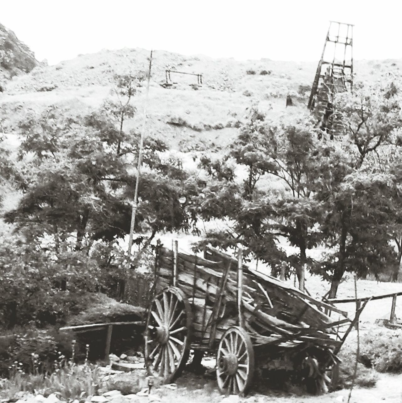 Tree Day Outdoors No People Growth Sky Nature Old Old Buildings Old Town Old Wagon Old Wagons Wooden Wagon Mining History Of America Mining Town Mining Equipment Mining Site Mining For Gold Mining For Silver Mining