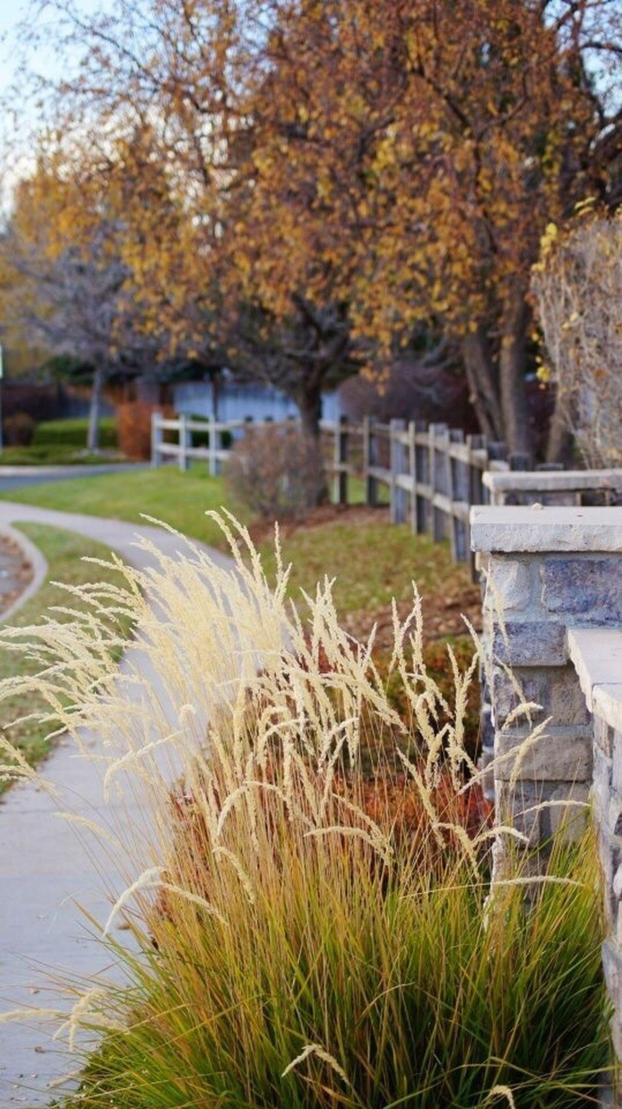 Autumn Fall Fall Colors Path Grasses Dusk Evening Light Evening Walk