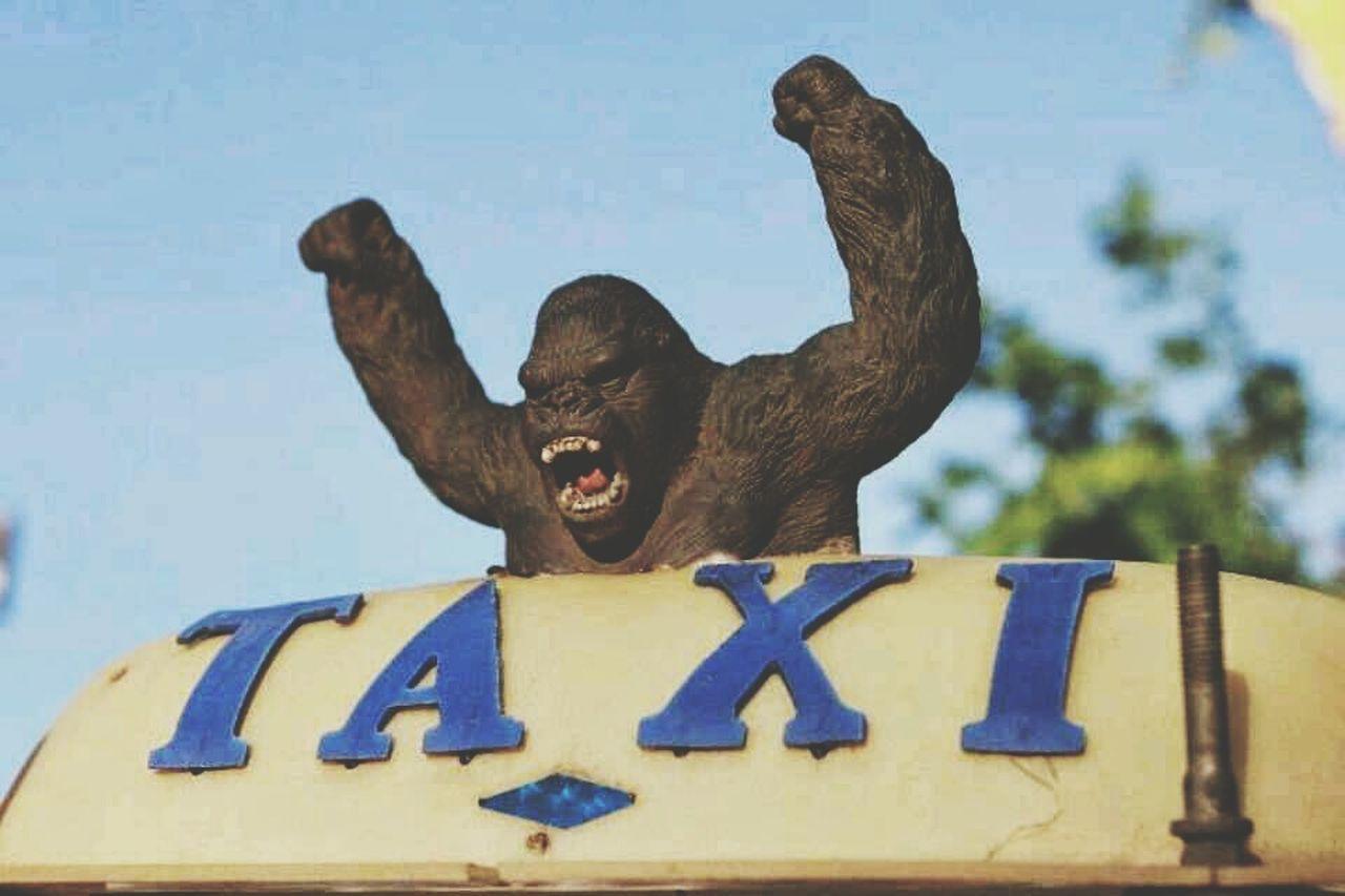 Funny Pics FUNNY ANIMALS Candid Thailand King Kong Side Of Me Taxi King Kong King Kong
