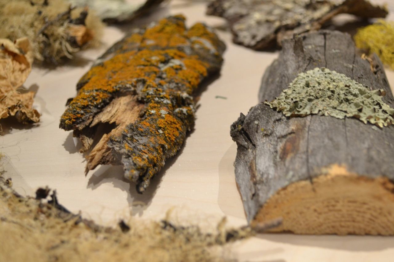 Nikon NikonD3100 Lichen Moss Samples On Wood Macro these are a few of my favourite things :) Nature's Diversities