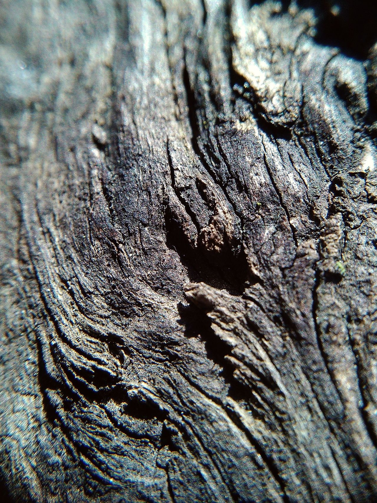 Backgrounds Black & White Black And White Close Up Nature Close Up Texture Close-up Grey Greyscale Macro Macro Nature Nature Old Tree Pattern Surface Level Textured  Tree Trunk Wood - Material Wood Surface Wood Texture Wood Texture Background Wooden Surface Wooden Texture