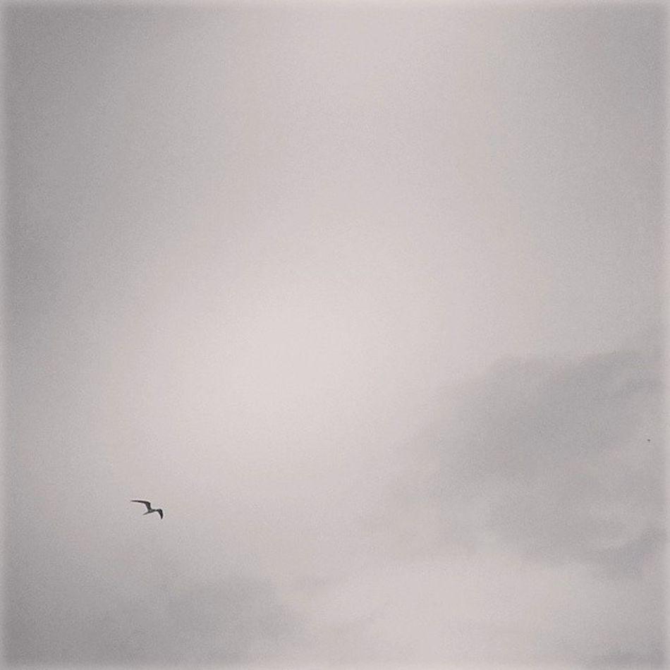 """""""Era uma Garça cheia de graça."""" Bomdia Photography Fotografandooceu Instaphoto nature"""