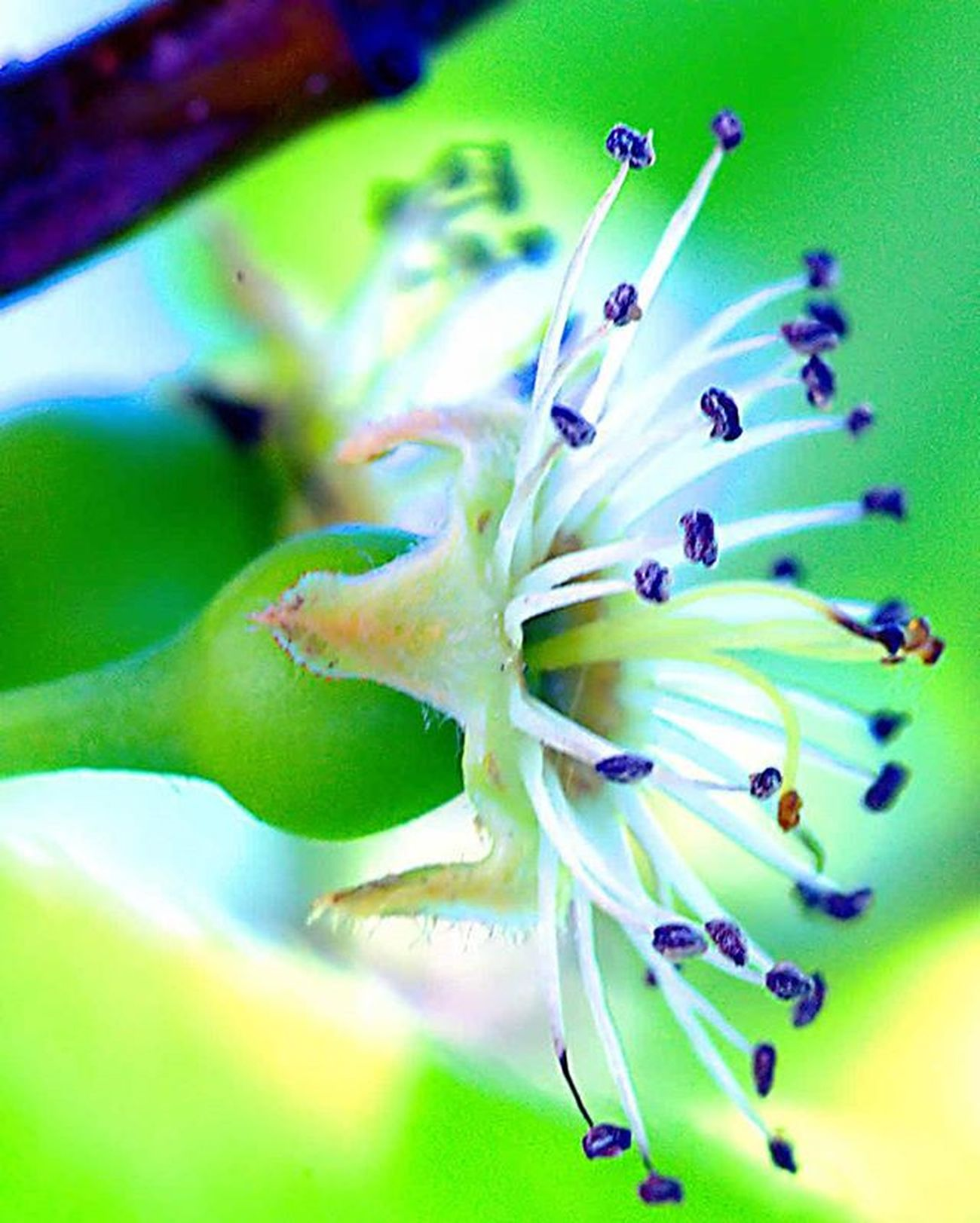 Stamens =) Stamens :) Stamens 1) Myworld_in_green 2) Ig_affair_weekly 3) Vms_macro 4) Small_world_upclose 5) 5star_images 6) Macro_vision 7) Sn_apr1 8) Mta_macro 9) Pic_groups 0) Macroclique 1) Tgif_nature 2) Pocket_family 3) Igglobalclubmacro 4) Macro_captures 5) Fotofanatics_macro_ 6) Ponyfony_flowers 7) Macroworld_tr 8) 9vaga_flowerscolor9 9) Flair_macro 0) Quintaflower 1) Ptk_macro 2) Naturehippys 3) Macro_secrets 4) Tv_colors 5) Macro_holic 6) ig_azhubs 7) macro_brilliance 8) 9vaga_macro9 9) show_us_macro 0) global_nature_macro