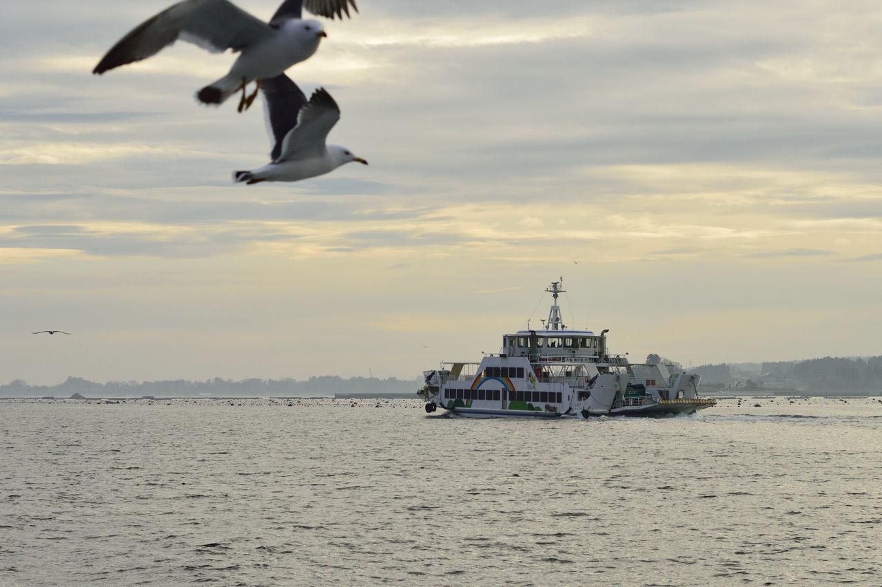 Kesennuma-bay Sea Seagull フェリー亀山 大島汽船