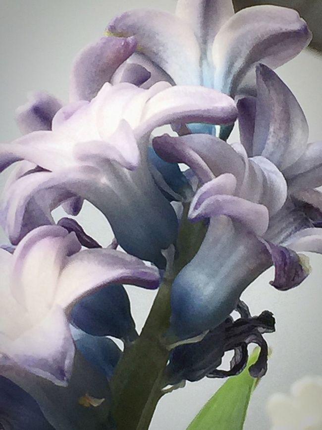 Simpel Beuty Spring Flower
