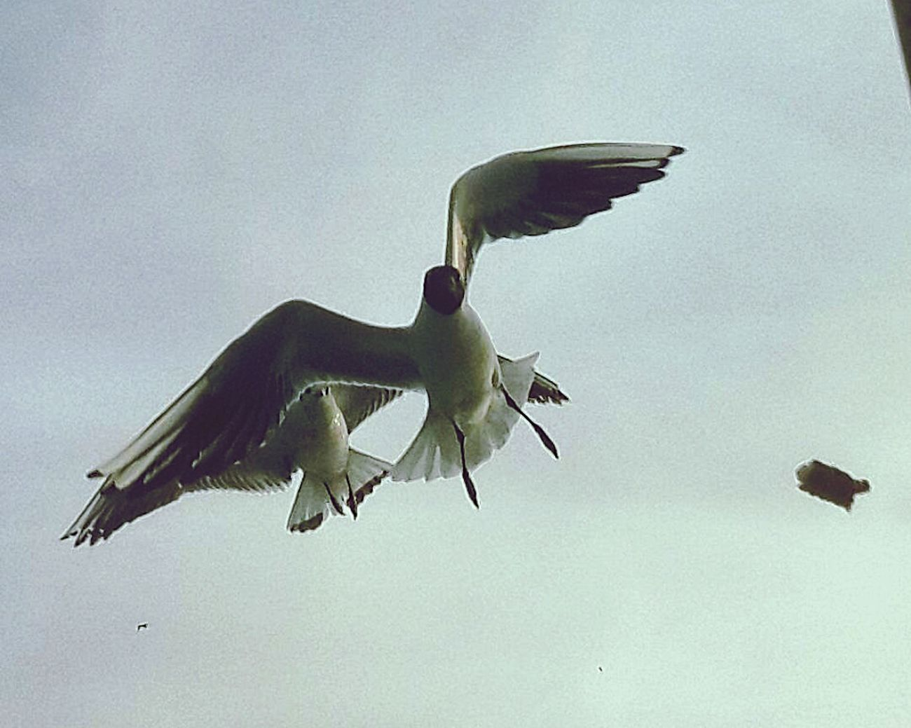 Istanbul Turkey💕 Beşiktaş ❤ Bird Nature
