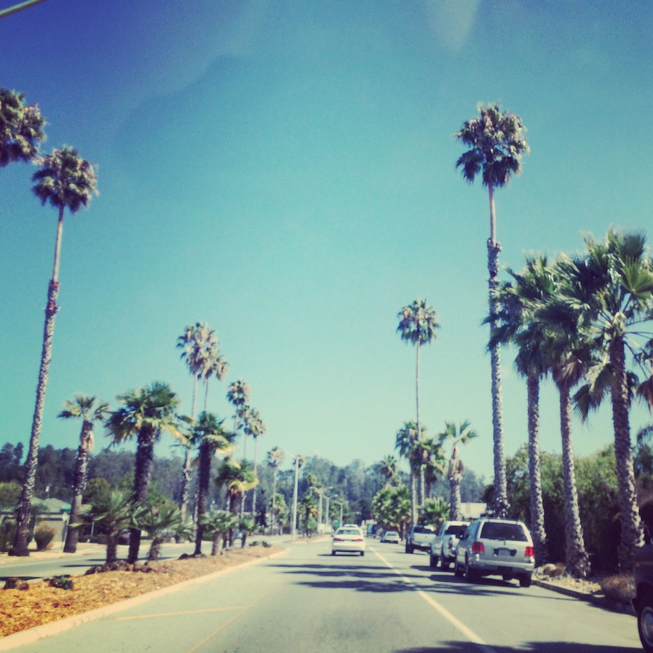 tree, car, road, palm tree, transportation, day, flower, growth, outdoors, land vehicle, sky, blue, beauty in nature, nature, no people, clear sky