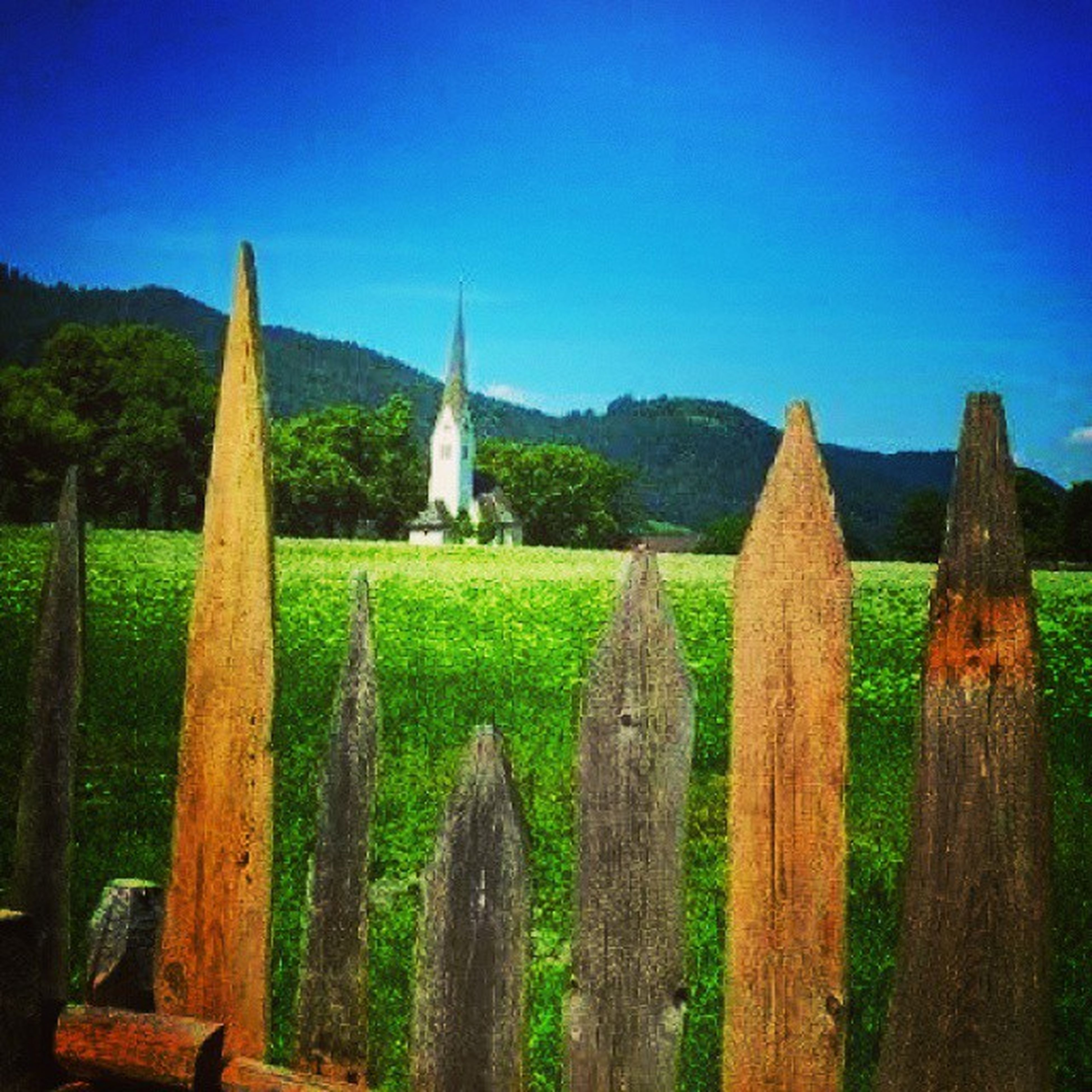 blue, clear sky, field, rural scene, agriculture, tranquility, tranquil scene, landscape, copy space, farm, grass, wood - material, nature, scenics, beauty in nature, green color, in a row, fence, sunlight, no people