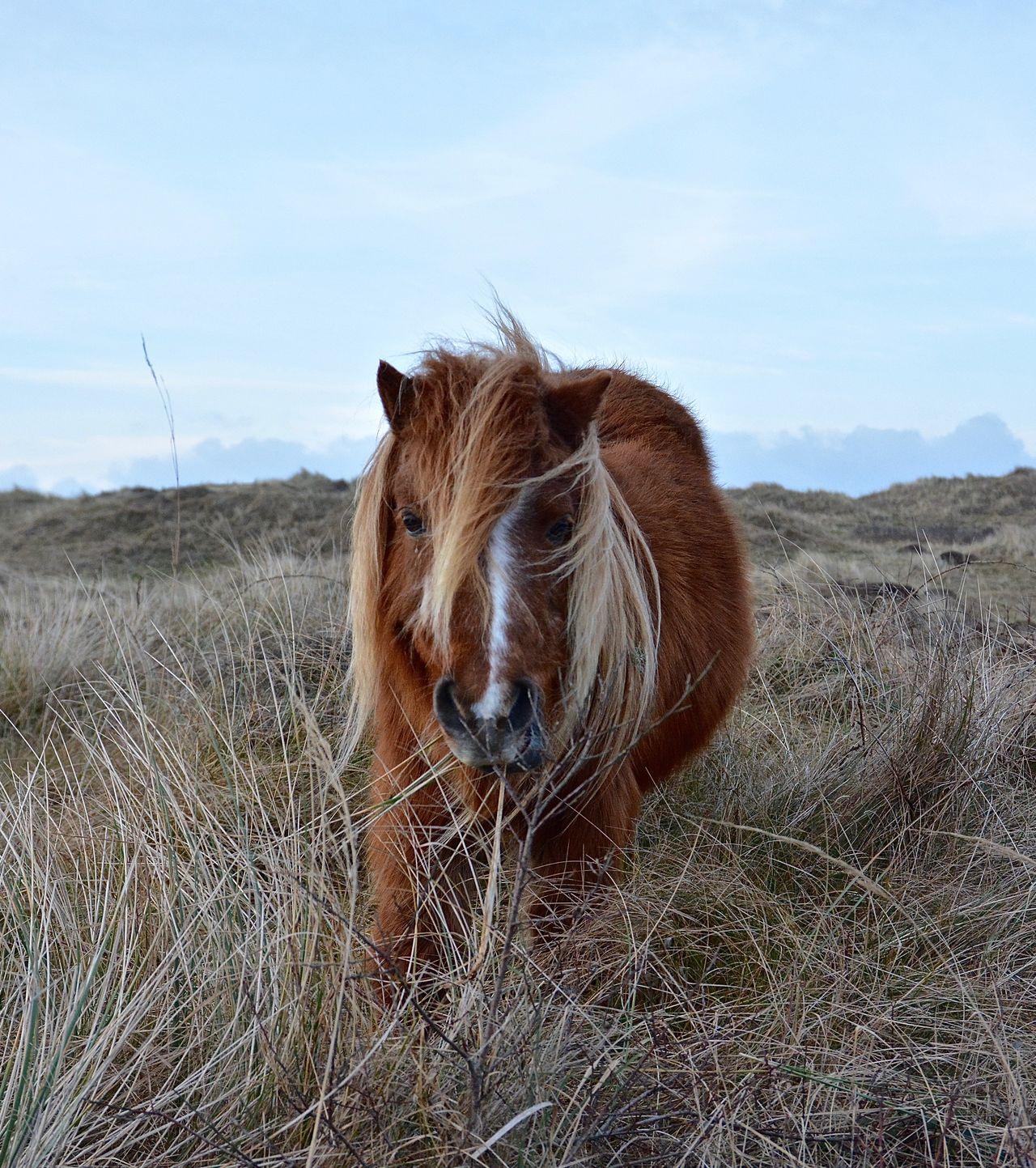 Beautiful stock photos of pony, Animal Hair, Animal Themes, Brown, Close-Up