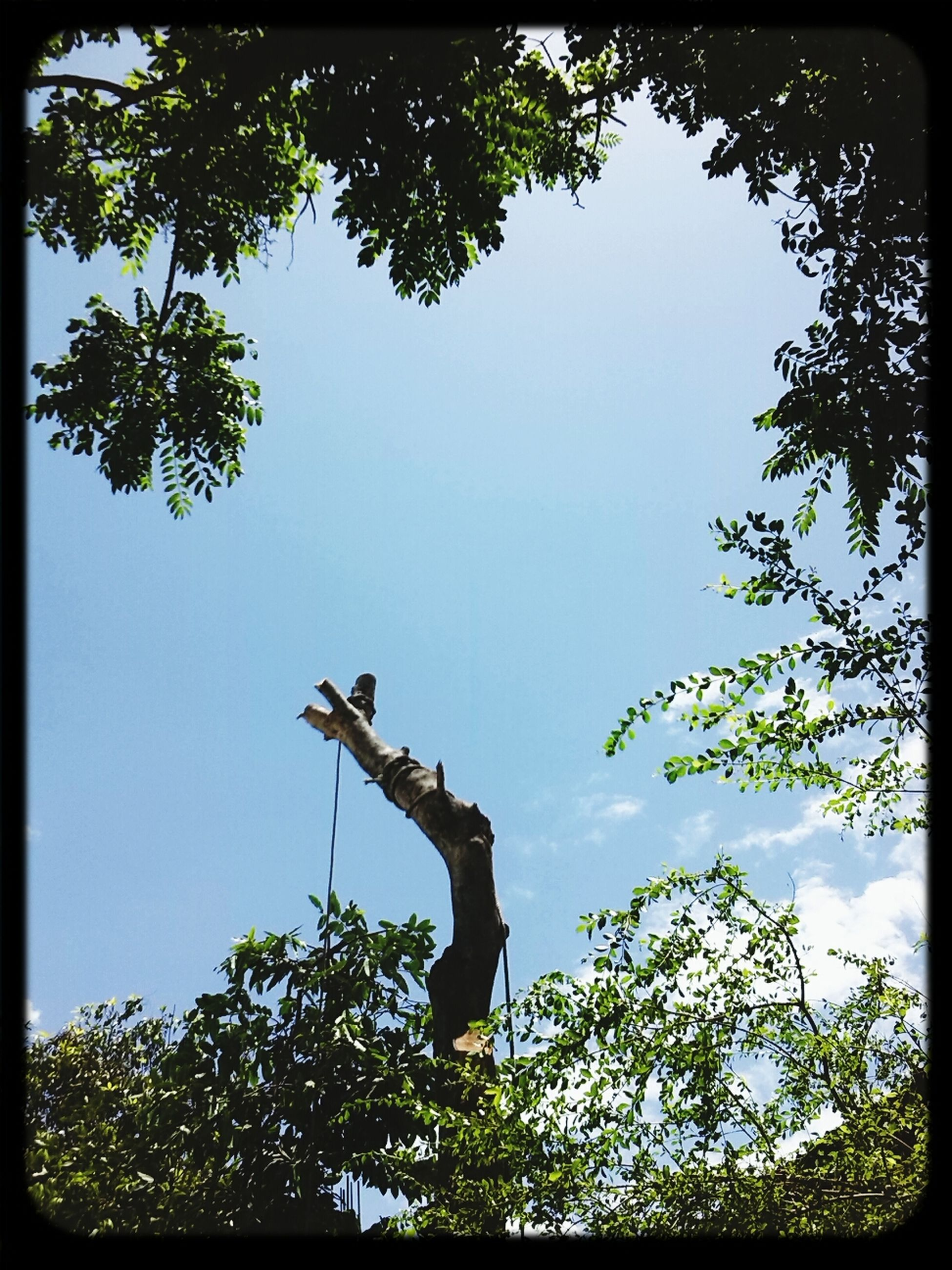 tree, low angle view, transfer print, auto post production filter, branch, clear sky, sky, growth, statue, silhouette, nature, outdoors, day, sculpture, no people, bird, sunlight, one animal, wildlife, green color