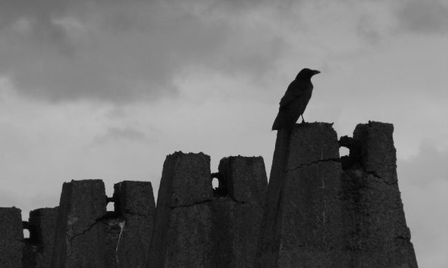 Cramond Crow Groyne Looking Out To Sea. Solitary Steps Bird Photography Birds Of EyeEm  Blackandwhite Blackandwhite Photography Black And White Photography Omen Badomen Signs Bad Sign Nevermore Poe