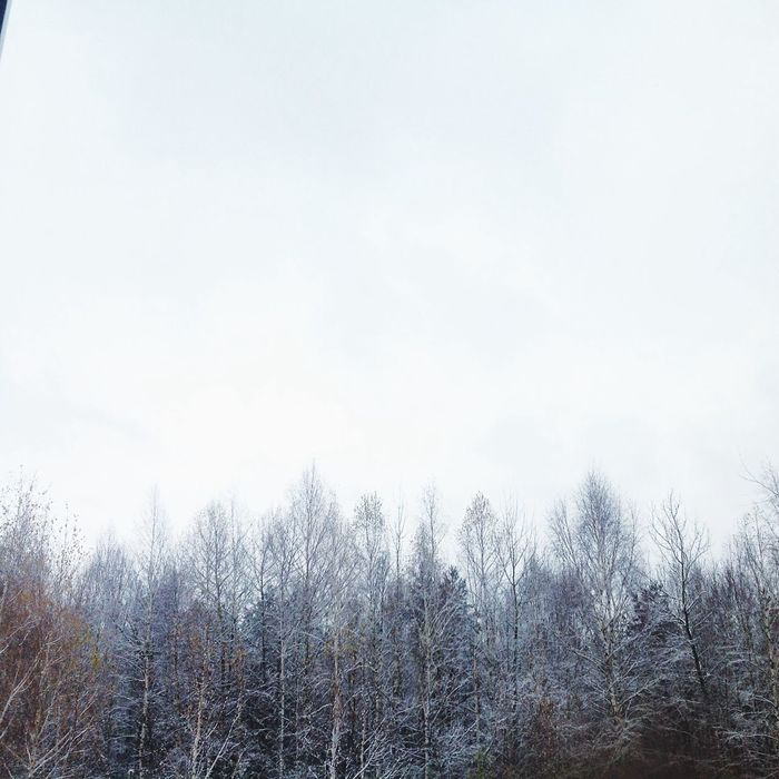 My Winter Forest