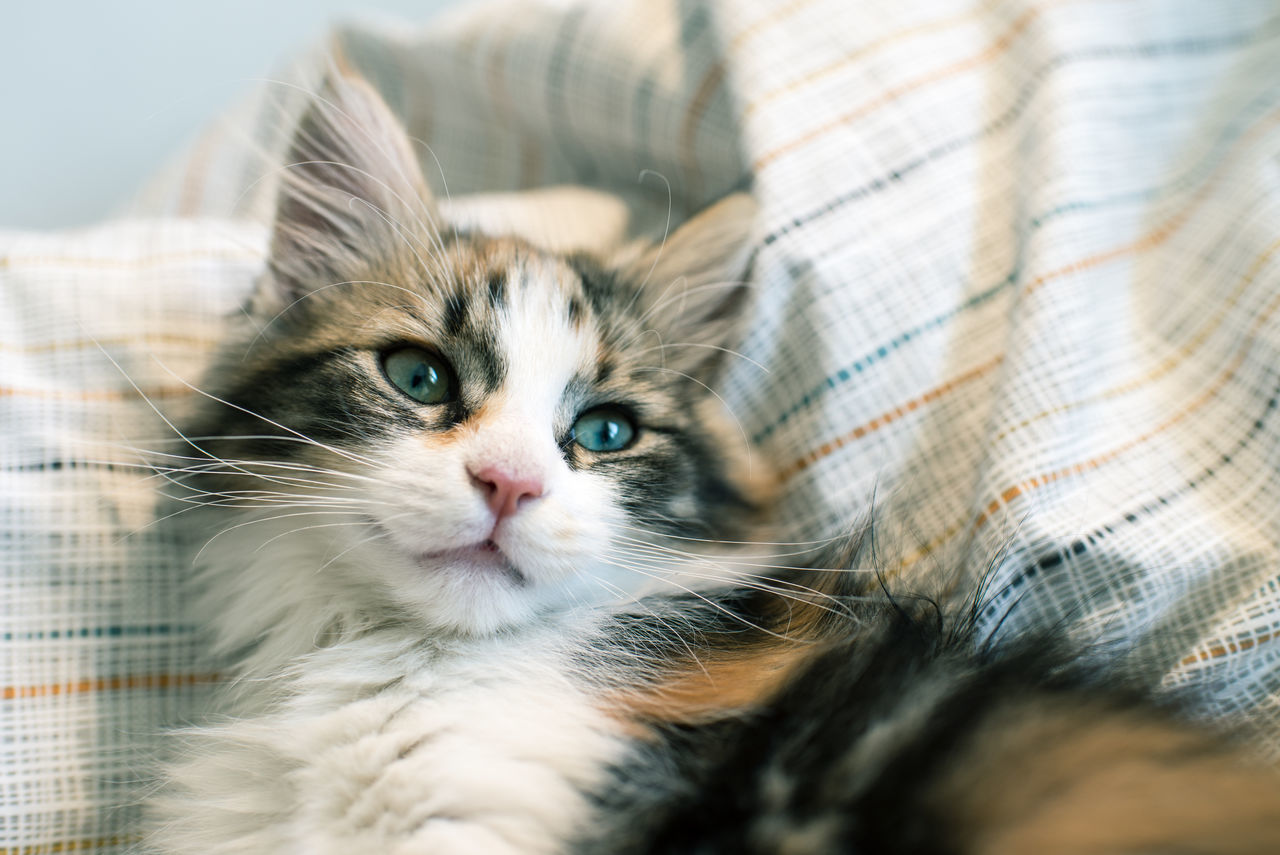 There is the inevitable.... Animal Face Animal Themes Blue Eyes Cat Cats Of EyeEm Close-up Domestic Animals Domestic Cat Feline Furry Indoors  Kitten Mammal No People One Animal Pets Portrait Whisker