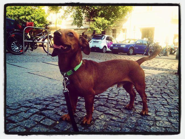 Sauce & Magoo: The Album Dog