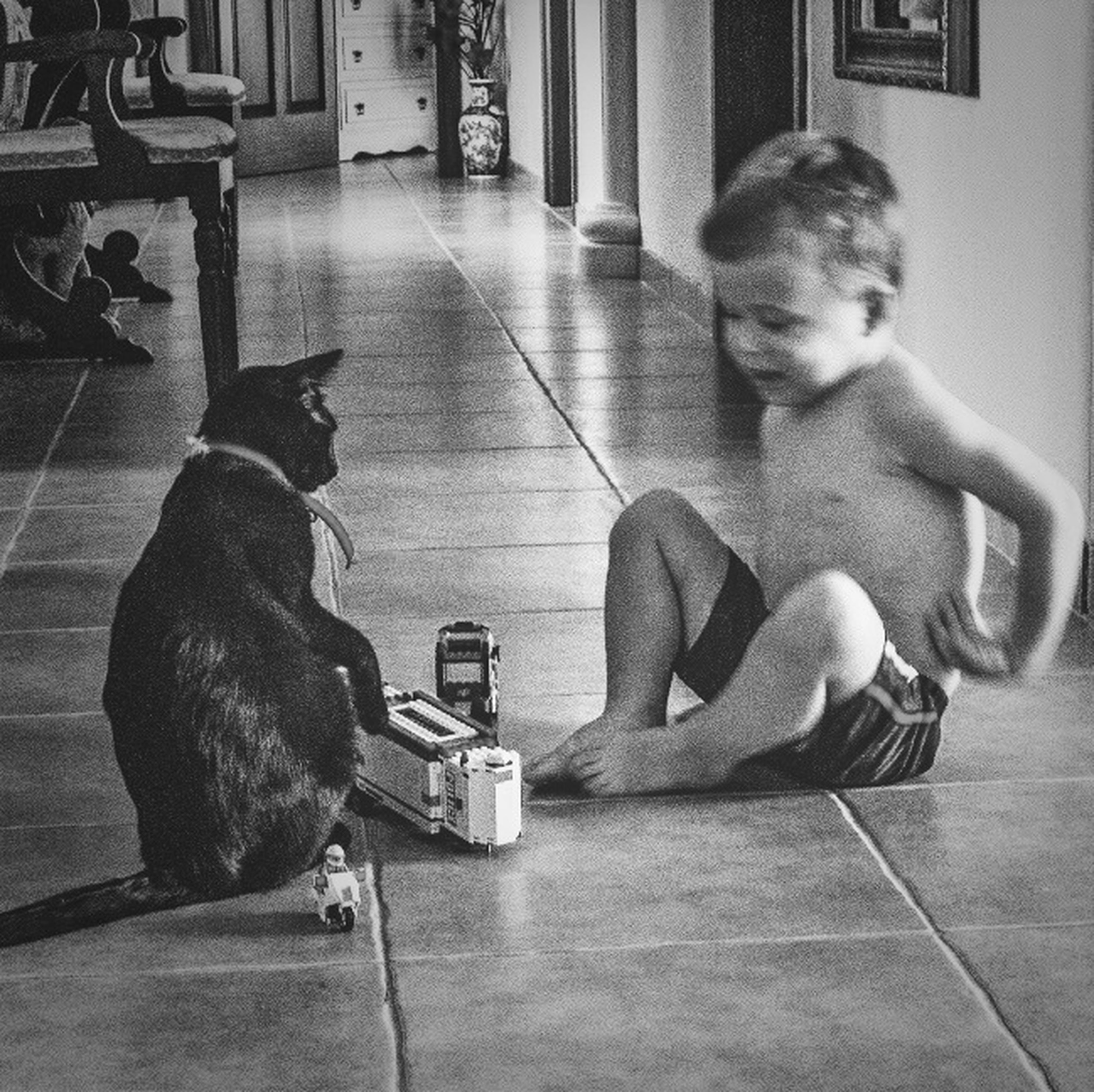 indoors, full length, pets, sitting, domestic animals, animal themes, dog, one animal, mammal, side view, lifestyles, childhood, home interior, flooring, leisure activity, boys, playing, relaxation