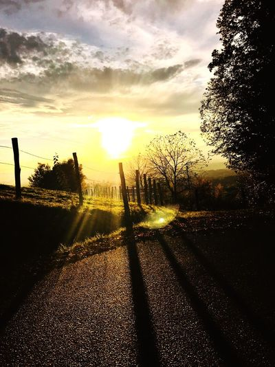 Sunlight Sunset Beauty In Nature Landscape