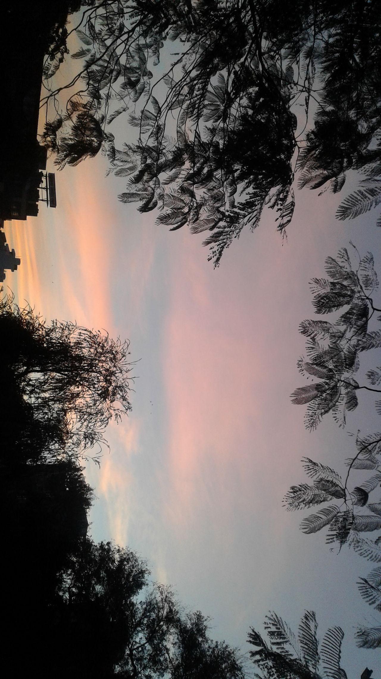 Tree Nature Sunset Heat - Temperature Sky Landscape