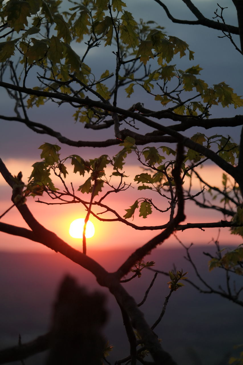 tree, nature, beauty in nature, sunset, branch, scenics, growth, tranquility, silhouette, sun, sky, outdoors, tranquil scene, no people, foreground, day