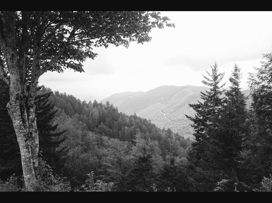 Mountain Tree Mountain Range Nature Landscape Forest Scenics No People Outdoors Sky Beauty In Nature Day Leaf Color Blackandwhite Black And White Blackandwhitephotography GreatSmokyMountains Greatsmokymountainsnationalpark Moss Trees And Sky Cannon Mountain View Mountainlandscape Country Road