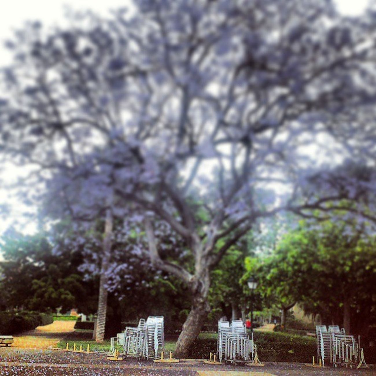 #valencia #jardinesdelreal #viveros #garden #spain Garden València SPAIN Viveros Jardinesdelreal