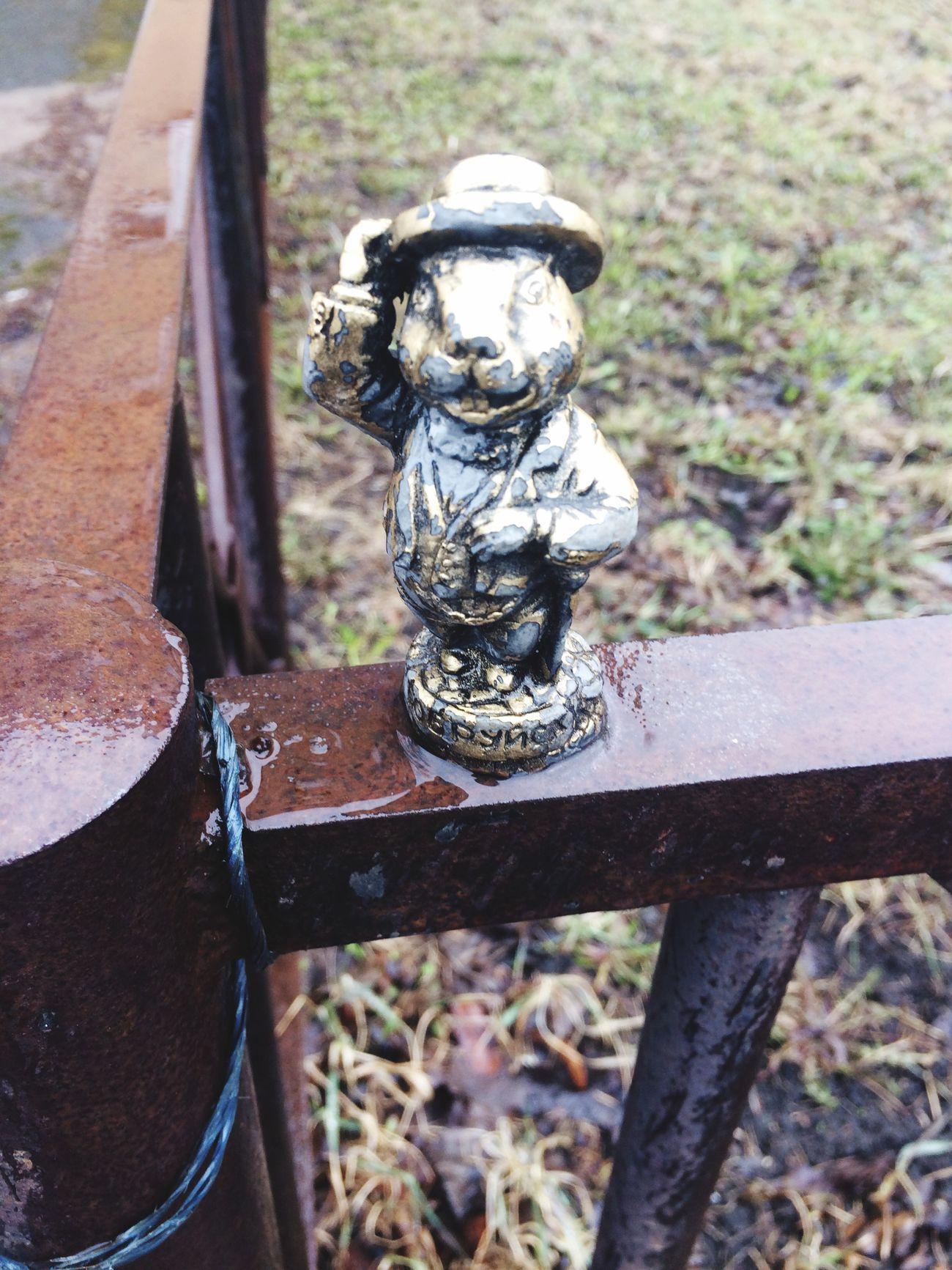 Beaver In Saint Petersburg Rainy Day Say Hello Unexpected Photo Smile