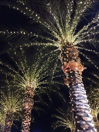 Christmas lights and palm trees Celebration Palm Tree Scottsdale Arizona Christmas Tree Christmas Lights Christmas Photography