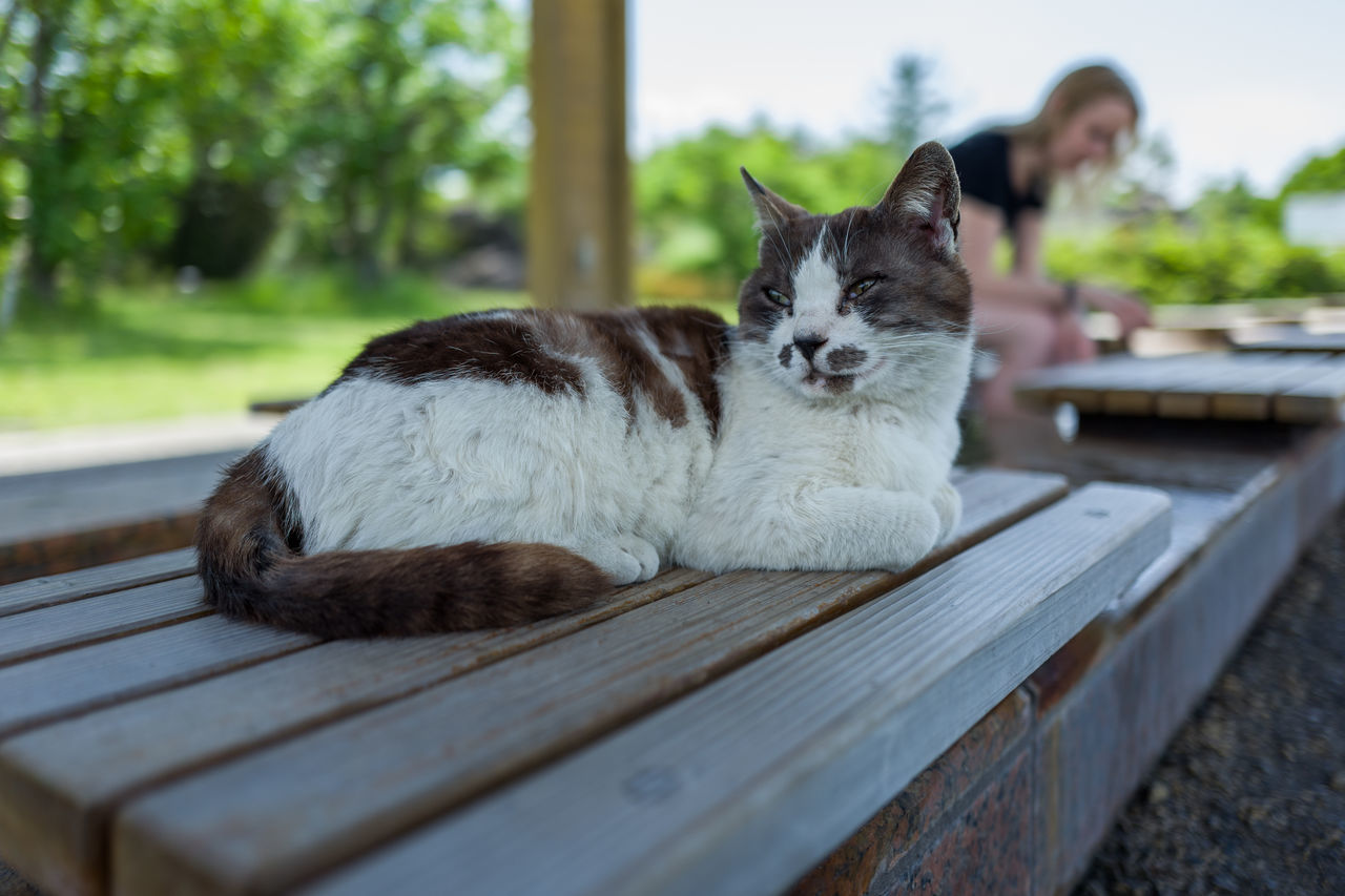Photos from Sakurajima, Japan Animal Themes Close-up Day Domestic Animals Domestic Cat Feline Japan KYUSHU Looking At Camera Lying Down Mammal Nature No People One Animal Outdoors Pets Portrait Relaxation Wood - Material