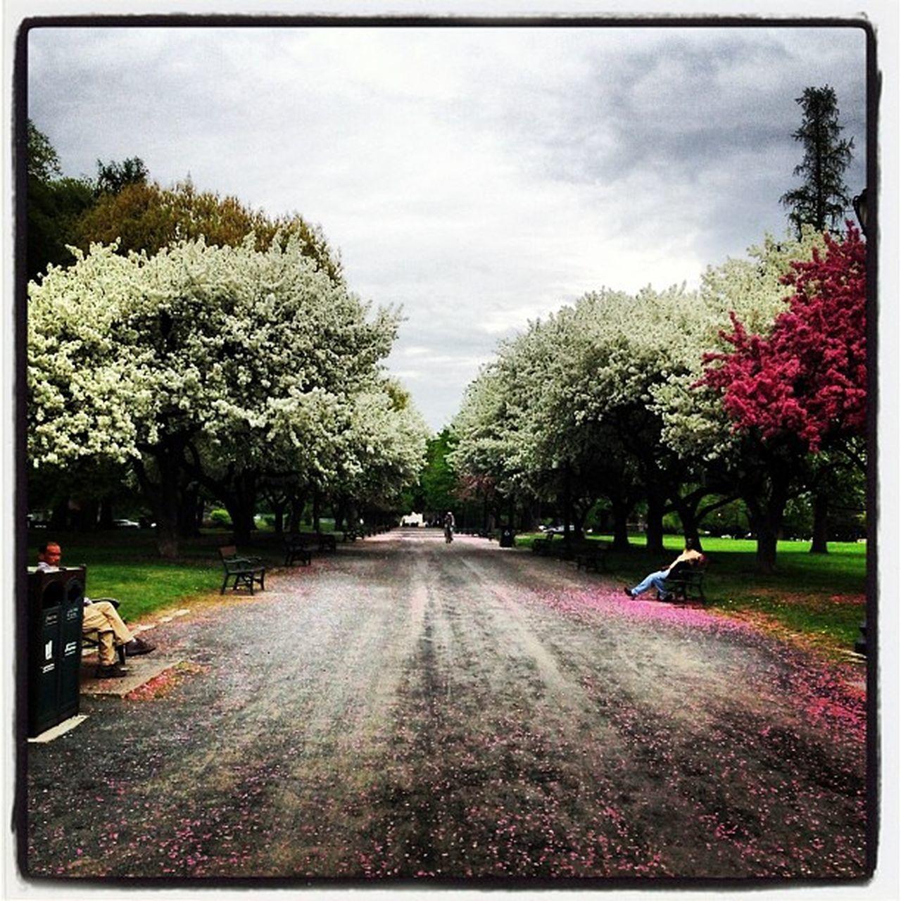 Springday Park Albany Washingtonpark newyork adayinthepark trees