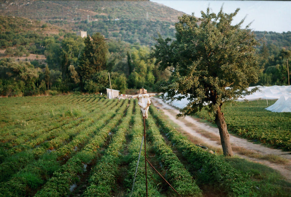 Beautiful stock photos of turkey, Beauty In Nature, Bodrum, Day, Field