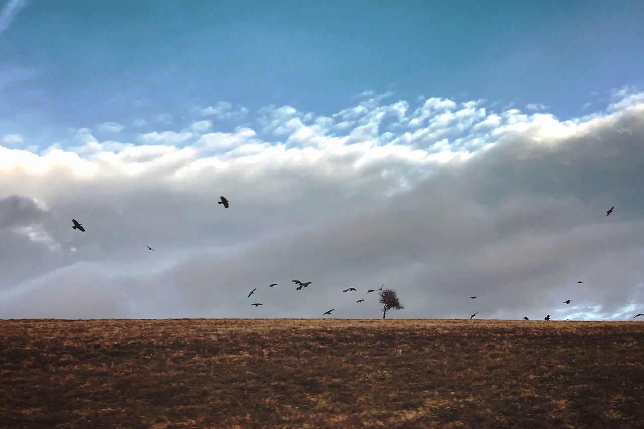 Flying Sky Cloud - Sky Nature Animal Themes Bird Outdoors Large Group Of Animals Animals In The Wild Beauty In Nature Scenics Day No People Migrating Togetherness Naturelovers EyeEm Best Shots EyeEm Nature Lover Sky And Clouds Birds Landscape_photography Landscape_Collection Beauty In Nature