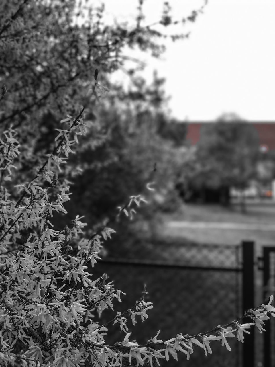 tree, growth, focus on foreground, plant, nature, day, no people, outdoors, close-up, beauty in nature, flower, sky