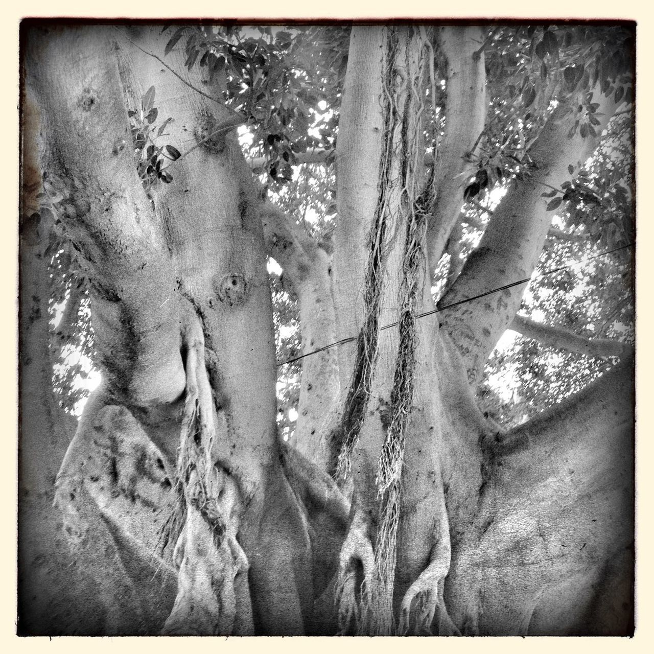 Streetphotography Hipstamatic Blackandwhite Tree