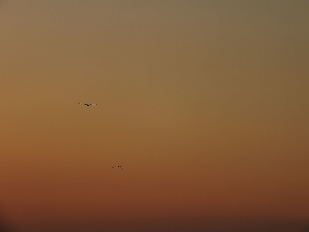 #birds #Nature  #sky #sunset #sun #clouds #skylovers #sky #nature #beautifulinnature #naturalbeauty #photography #landscape #two_birds